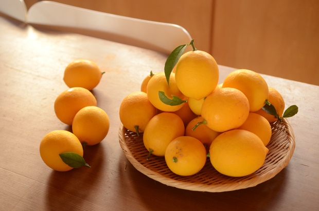 庭のレモン