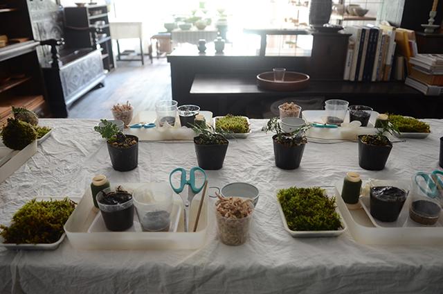 榊麻美植物研究所