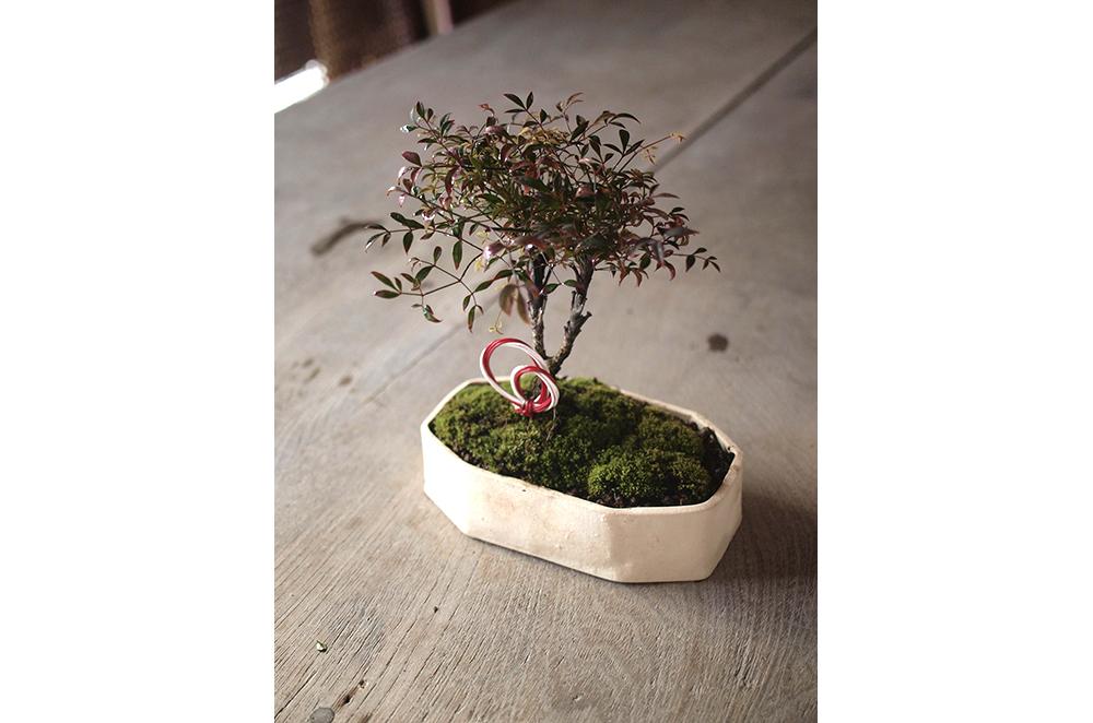 12月16日(土)榊麻美さんの「お正月に飾りたい縁起のよい錦糸南天の盆栽をつくるワークショップ」参加者募集