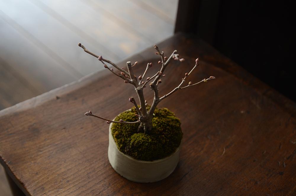 榊麻美さんの盆栽ワークショップ開催しました
