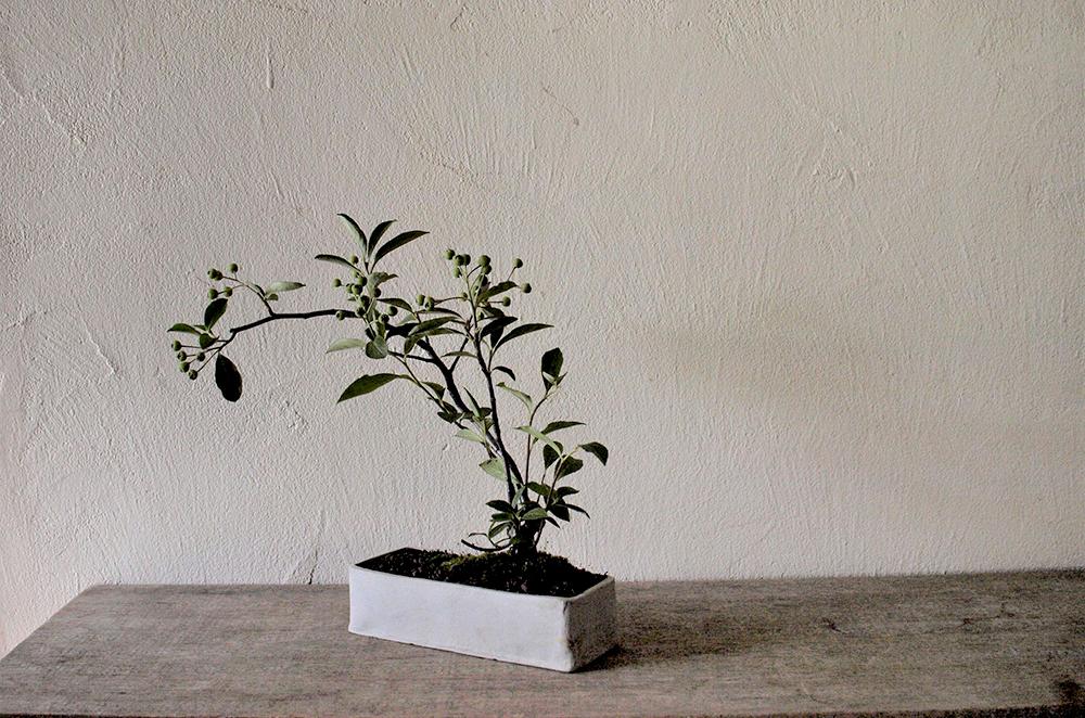 9月29日(土)榊麻美さんの「秋の実を楽しむ西洋カマツカの盆栽ワークショップ」参加者募集