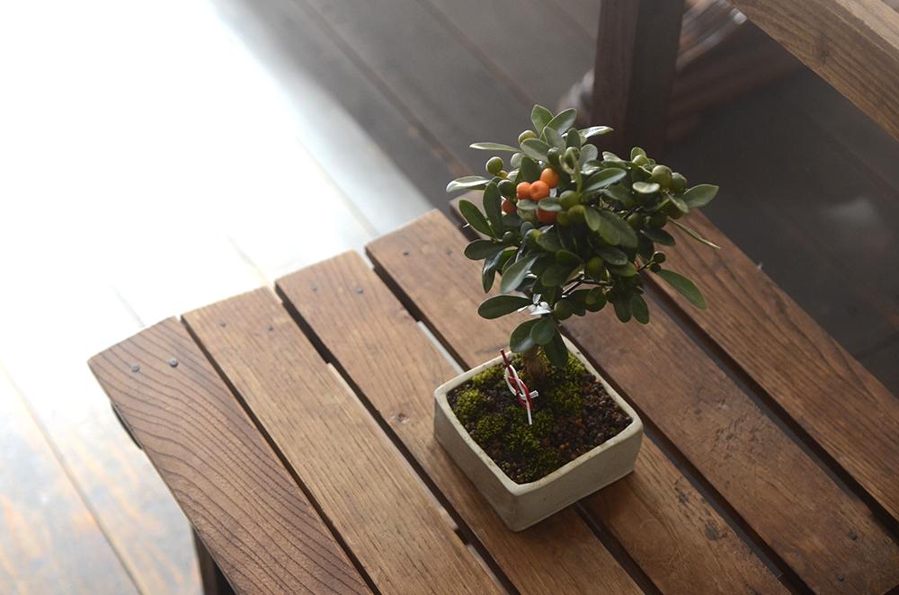 榊麻美さんの盆栽ワークショップの日でした