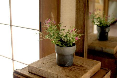 7月13日(土)榊麻美さんの「屋久島萩と茶筅シダの寄せ植えワークショップ」参加者募集
