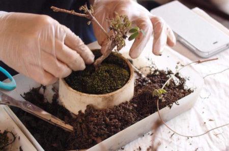 3月14日(土)榊麻美さんによる春の植え替え会&診療会を開催します