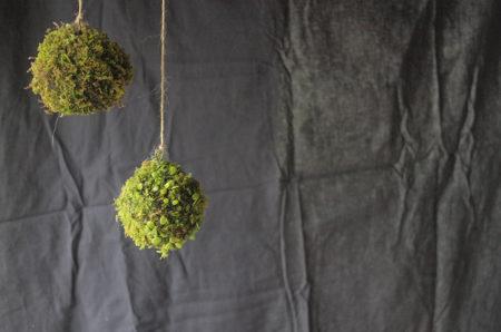 7月17日(金)18日(土)榊麻美さんの「豆ヅタの吊り苔玉を作るワークショップ」参加者募集